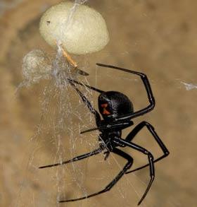surprise spider control