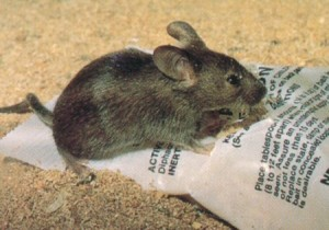surprise rodent control