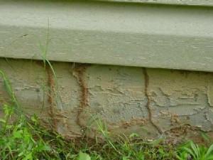 surprise termite control